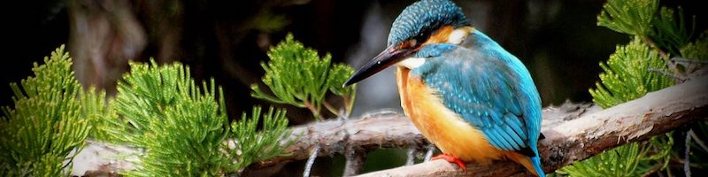 Accessible Birding Articles - Photo provided under Creative Commons license by Flickr user coniferconifer