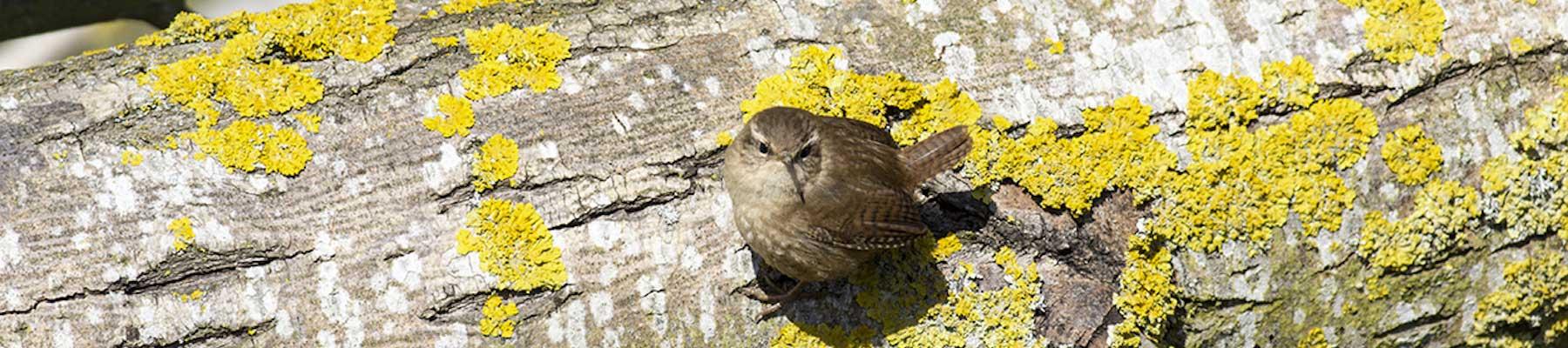 Birding For All